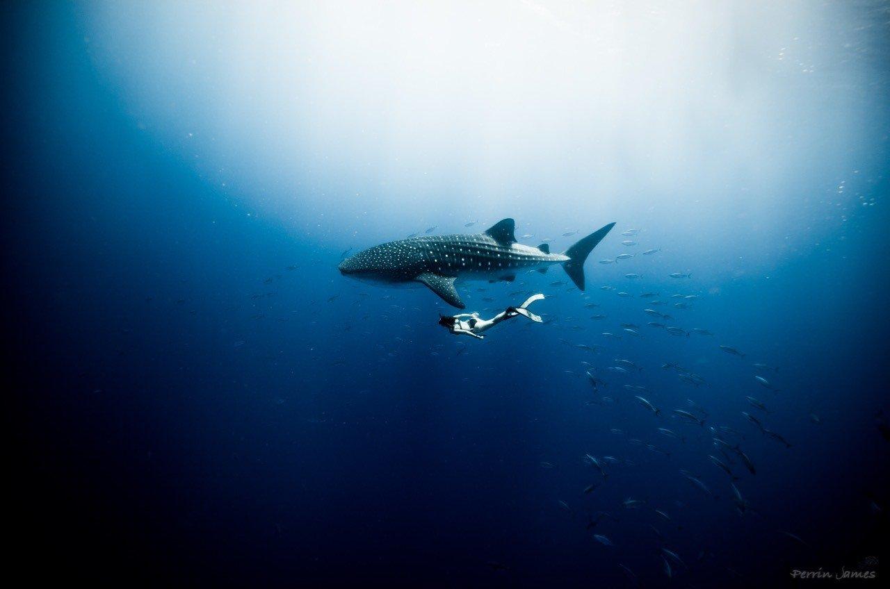 The Ocean Film Festival Australia. Photo by Perrin James