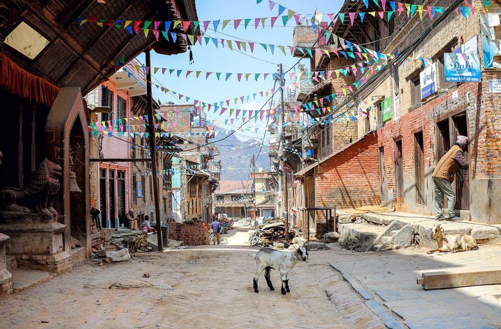A lone goat standing in a street in Nepal when backpacking the asian trail