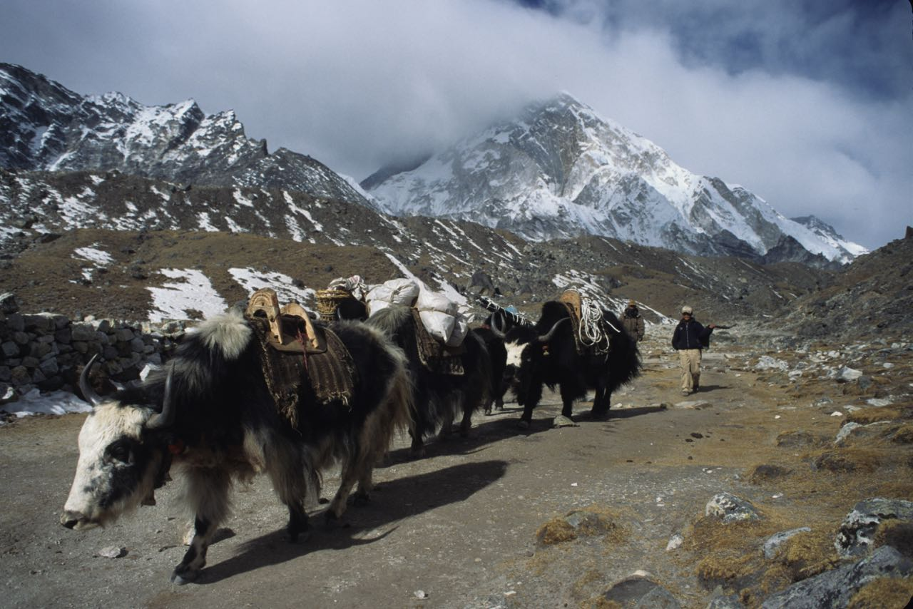 taking a ride on a yak on the trail to Everest Base Camp