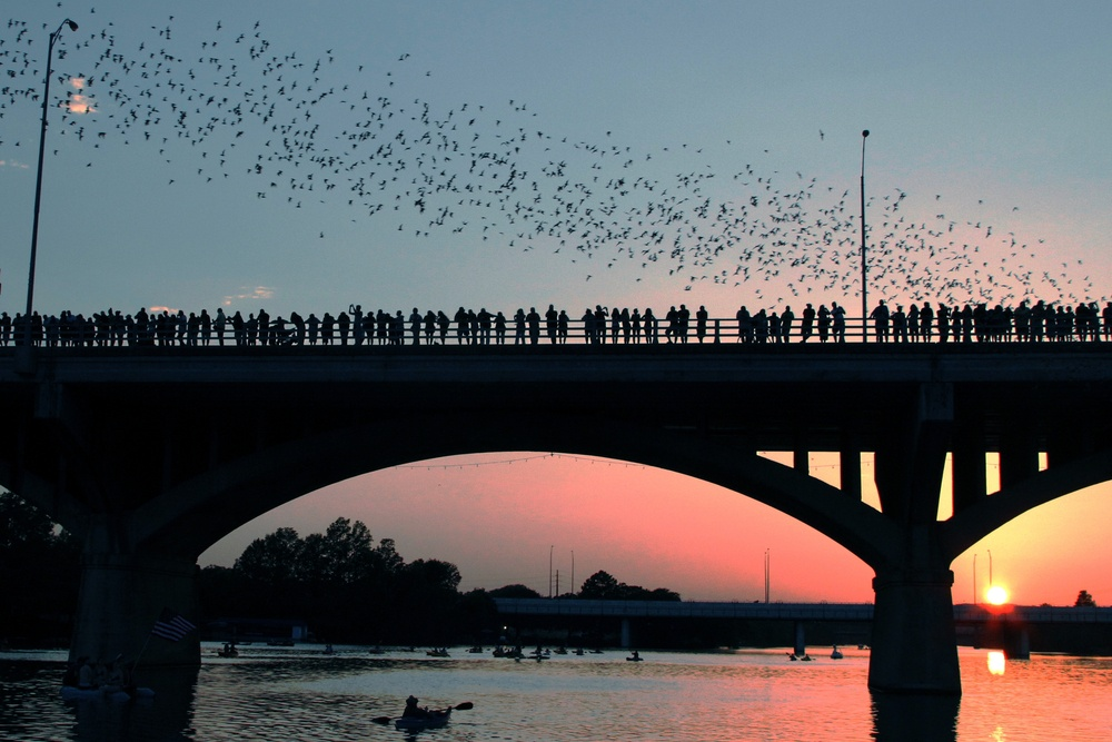 Watching the bats take flight at Batfest one of the best festivals in Austin