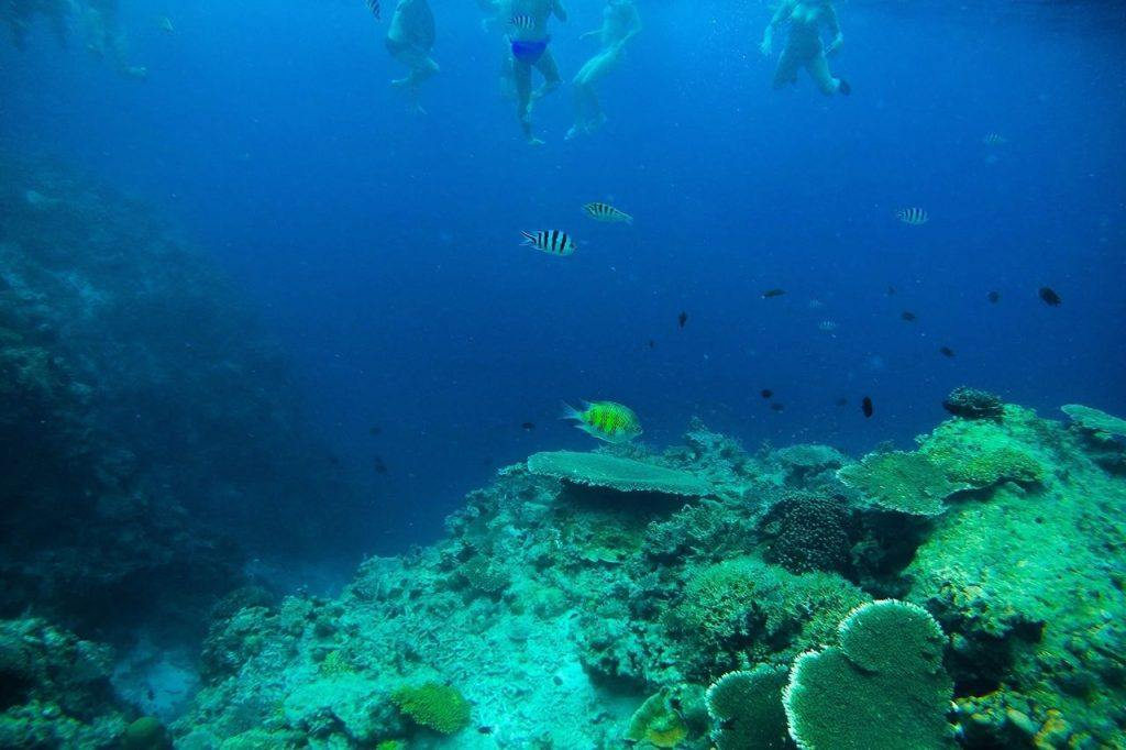 Island Adventures snorkelling in the Philippines