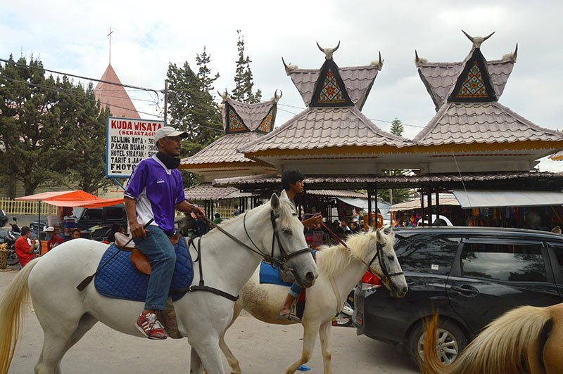 sumatra by motorbike horses on the road