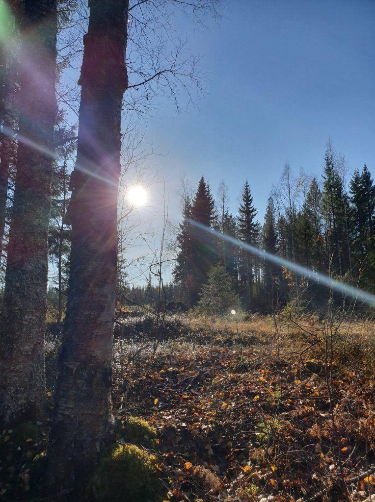 Beautiful nature in Sonkajärvi