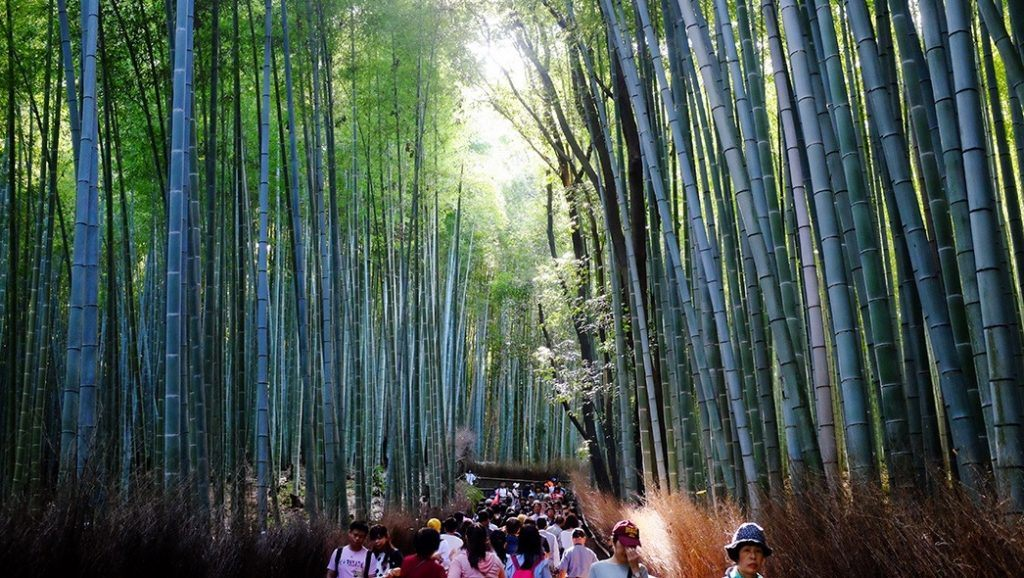 Things to do in Kyoto, visit the bamboo forest