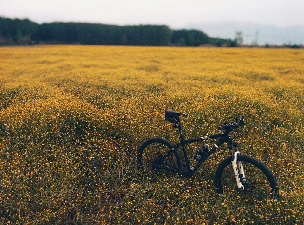 Mountain Bike Trails in Australia murray to mountains rail trail
