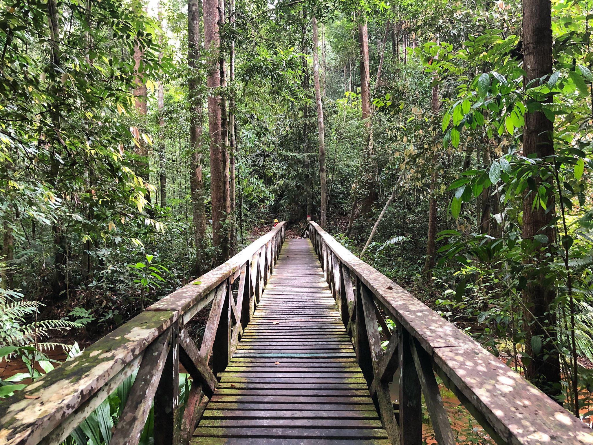 Sarawak Borneo jungle bridge walk