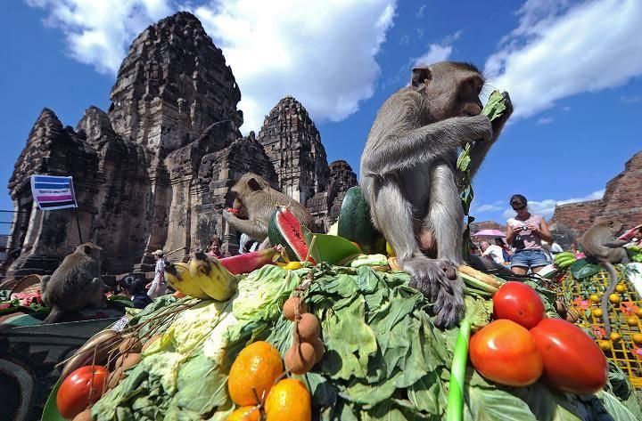 Monkey Buffet Festival 2020