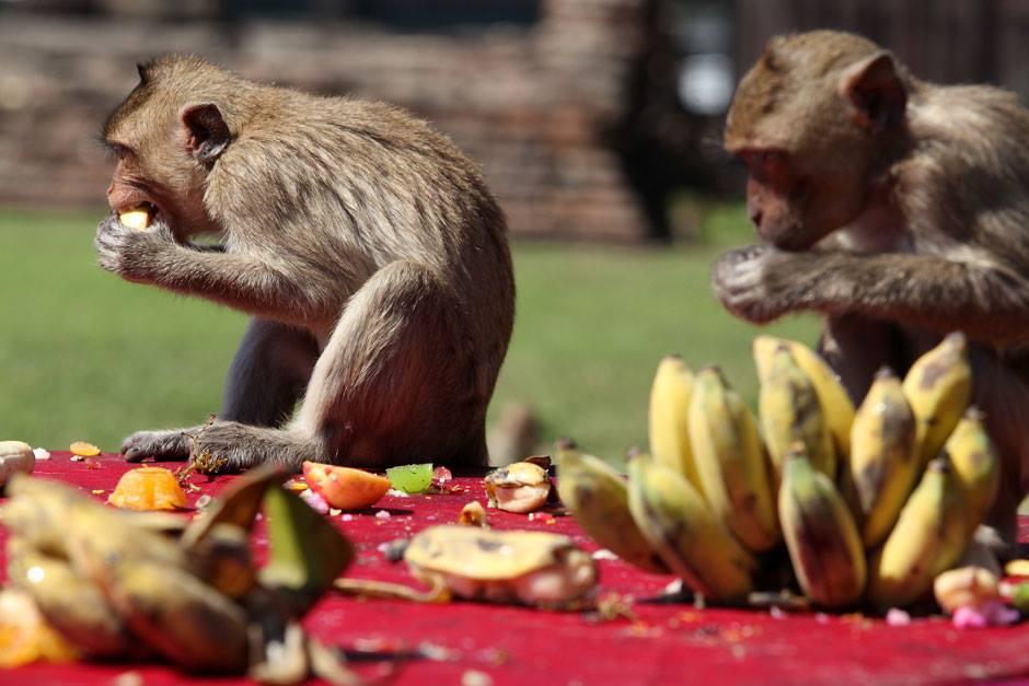 Lopburi's famous monkeys