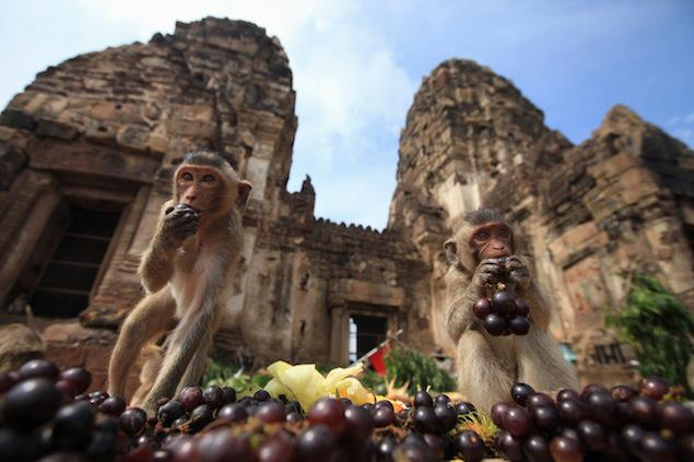 annual monkey feast in Thailand