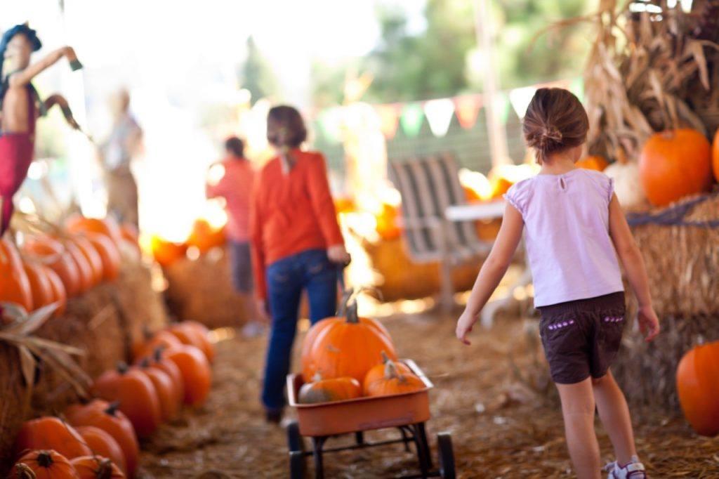 Food Festivals In Serbia, pumpkin festival