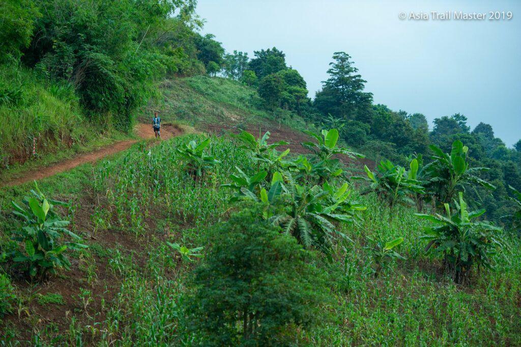 Jungle near Chiang Rai