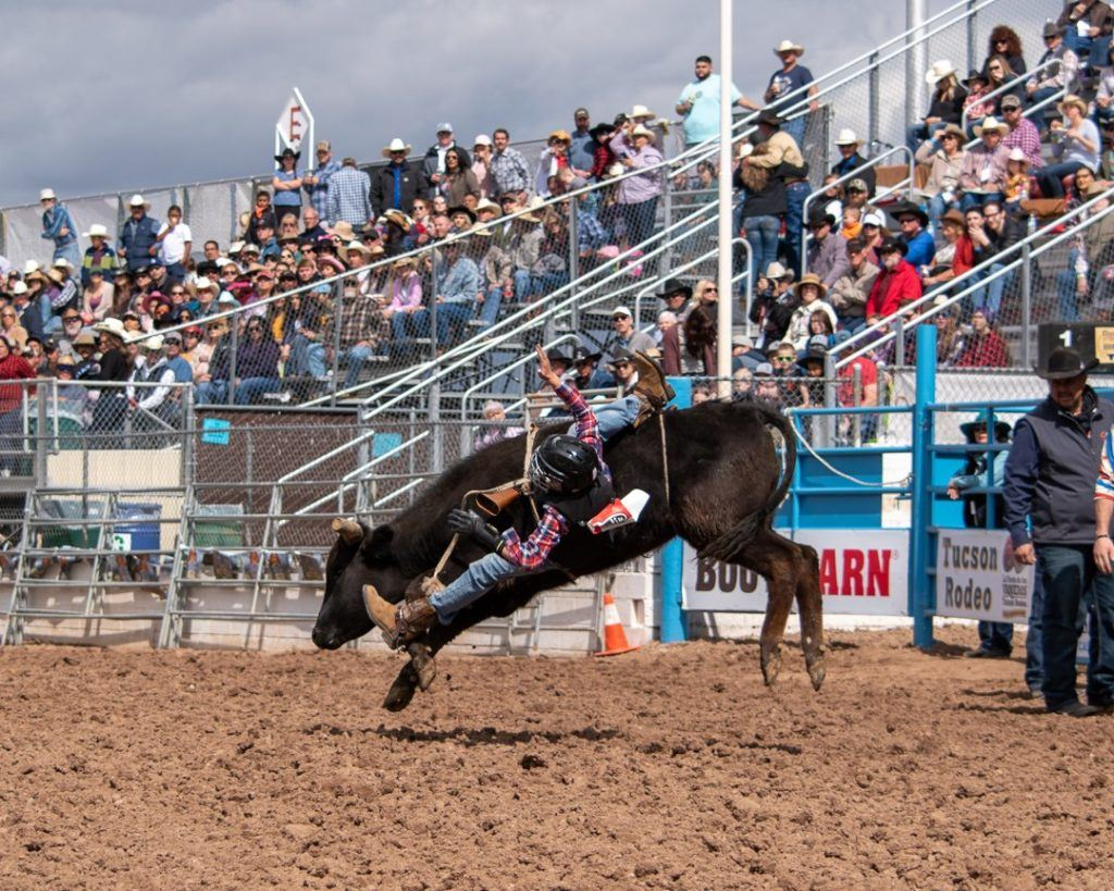 bull riding at Tucson Rodeo