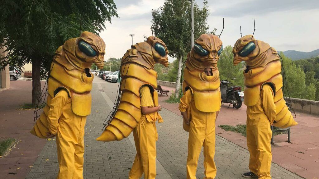 Bees at Fil Loxera