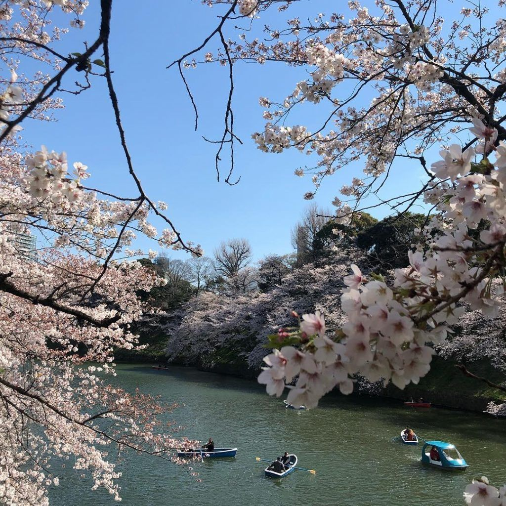 Beautiful Japan during the Blossoming season