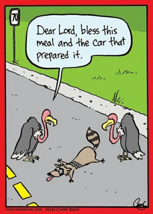 Funny roadkill cartoon