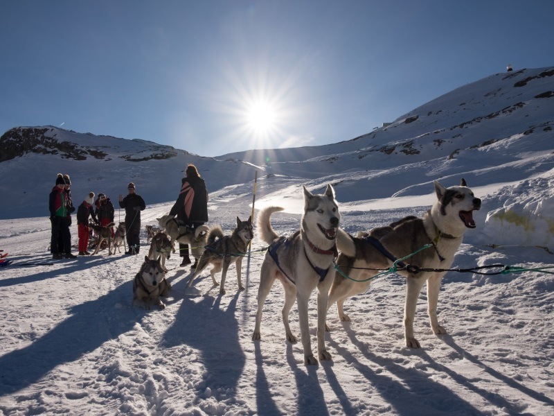 Dog Sled Rides in Switzerland