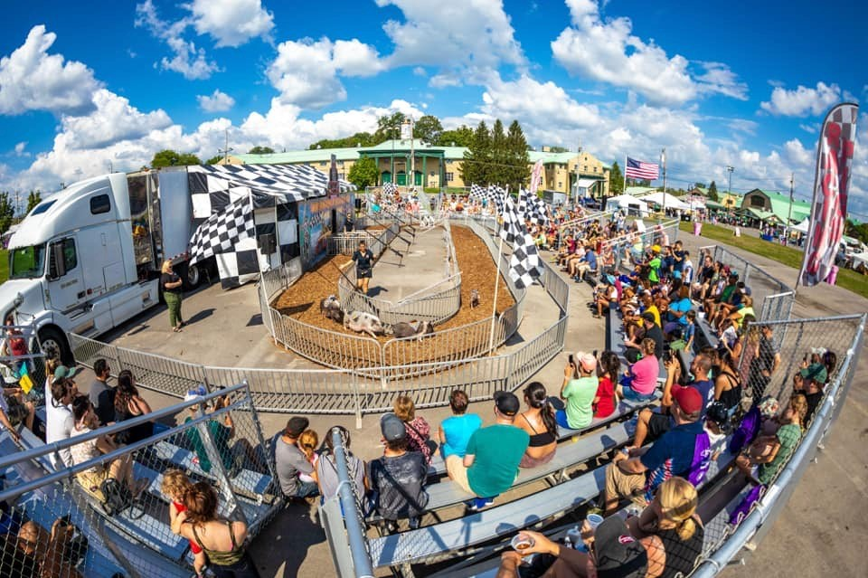 racing pigs at New York State Fair
