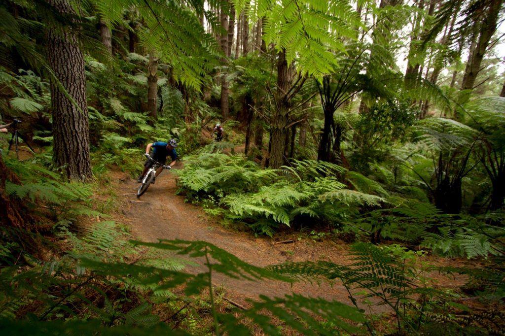 Mountain Biking in the forest in NZ