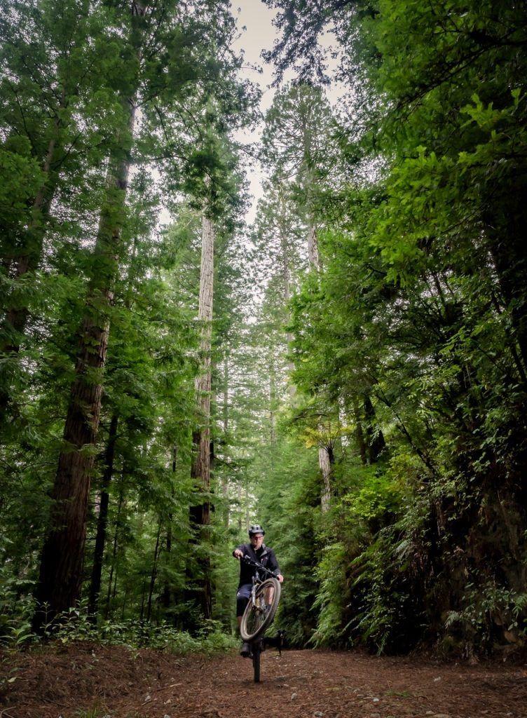 Redwoods mtb new zealand