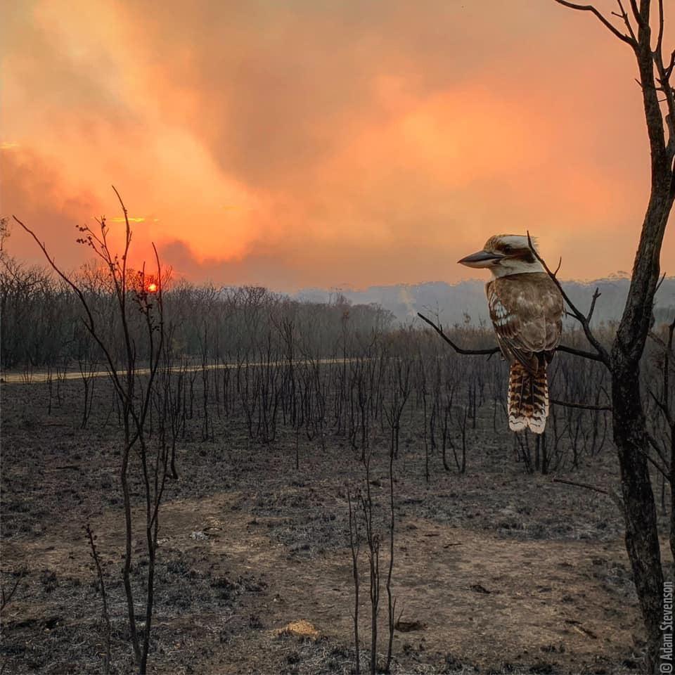 WWF supports Bushfires in Australia