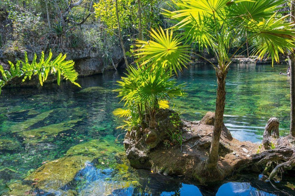 Open Cenote Jardin del Eden in Mexico